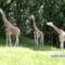 Bronx Zoo 051