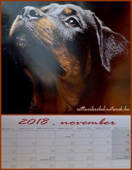 Rottweiler - November
