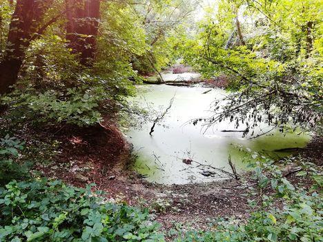 Lajta folyó bal parti holtága a Wittmann Parkban, Mosonmagyaróvár 2018. augusztus 28.-án 1