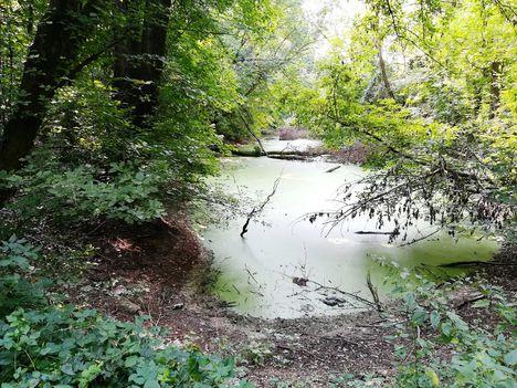 Lajta folyó bal parti holtága a Wittmann Parkban, Mosonmagyaróvár 2018. augusztus 28.-án 3