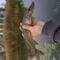 Csuka_2084827_6874_s