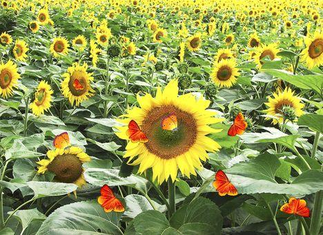 Virág, a nyárban. 1