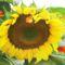 Virág, a nyárban. 2