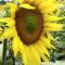 Virág, a nyárban. 4