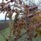 December gyümölcse a kertben