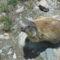 Mormoták 1