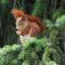 Aranyosi Ervin: A mókus karácsonya