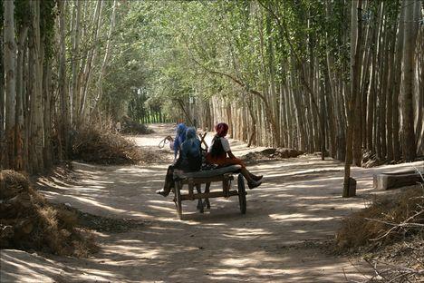 kashgar mellett