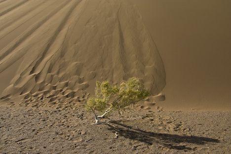 közel a sivatag