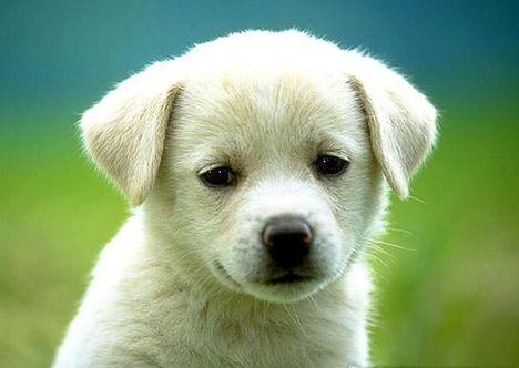 fiatal-feher-kis-kutya-kép