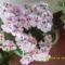 Virágos  folyosóm 032