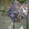 תמונהgil 14 szuli napja 2007 8