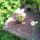 Kaktusz_3a_termeszet_csodaja_280481_77973_t