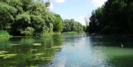 Kalapszigeti Duna-ág a szigetközi hullámtéri vízpótlórendszerben, Ásványráró 2016. július 15.-én