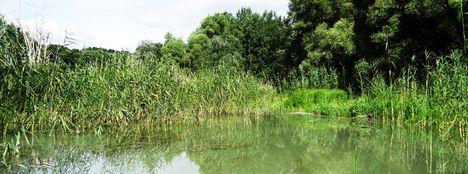 Kalapszigeti Duna-ág melletti vizes élőhely, fok , Ásványráró 2016. július 15.-én