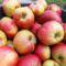 Pogácsa alma
