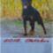 Rottweiler__oktober_2080992_8373_s