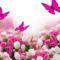 Rózsák-pillangók
