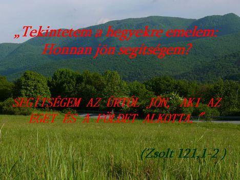 zsolt 121 1