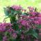 2009 Virágok 088