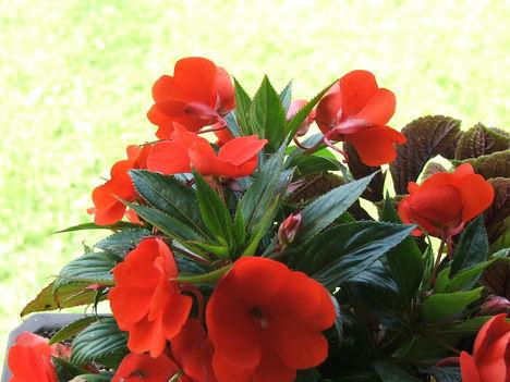 2009 Virágok 098
