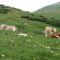 Alpesi táj magyar tarka tehenekkel :-)