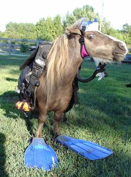 scuba_diving_horse