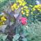 Zsuzsa kertje