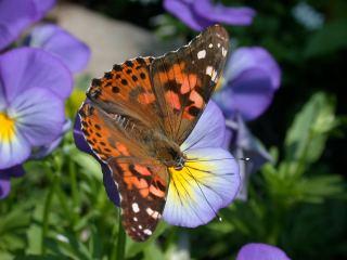 A Természet egyik gyönyörű Teremtménye.! 8