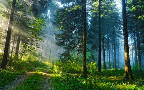 Gárdonyi Géza:Vasárnap a Rohicsi erdőben