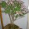 Kedvenc Virágaim Növényeim. 4