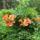Szemet gyönyörködtető növények