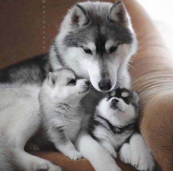 Aranyosi Ervin: Anyai szeretet a kutyáknál