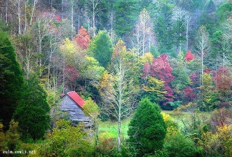 ószí erdő