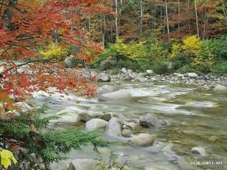 őszí fojó