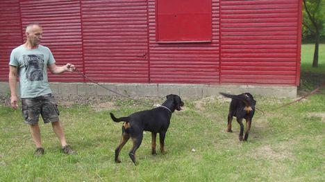Kutyaiskolában