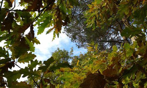 levelek között