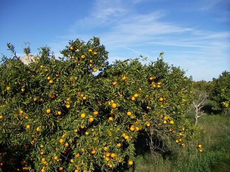 narancsliget