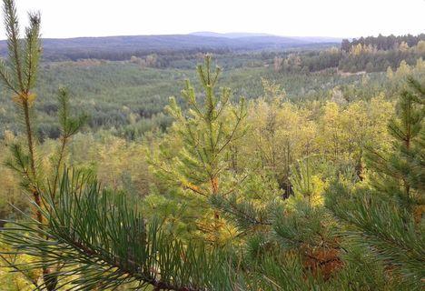 őszi zöldek