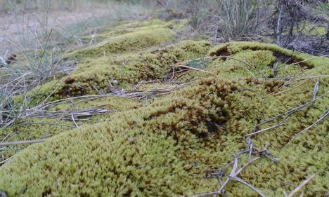 zöld hullámok
