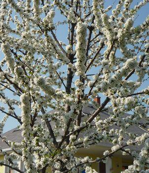 A tavasz első virágai. 1
