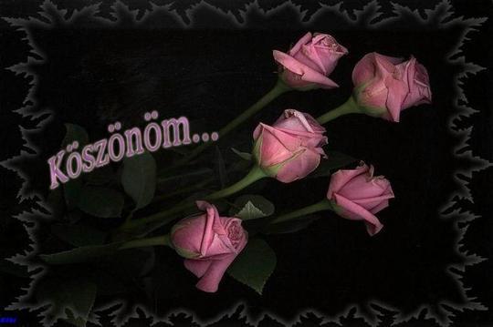 http://pctrs.network.hu/clubpicture/2/_/idezet_koszonom_20485_520388.jpg