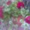 Saját virágaim.