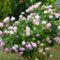 növények.virágok 005