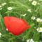 Virágok közt 417