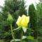 Virágok közt 435
