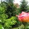 Virágok közt 453