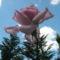Virágok közt 523