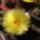 Viragzo_kaktusz-001_312570_58526_t