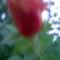 Kép004